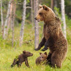 Karhut työnohjauspalvelu Leena Aijasaho
