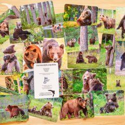Karhukortit voimakortit terapiakortit voimavalokuvapakka Leena Aijasaho työnohjaaja