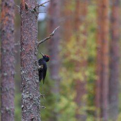 Metsä rayhoittaa mielen sanoo työnohjaaja Leena Aijasaho